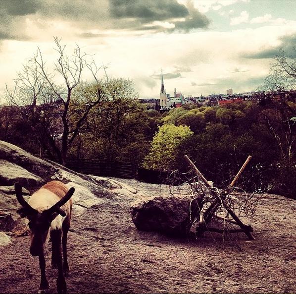 le zoo de skansen stockholm