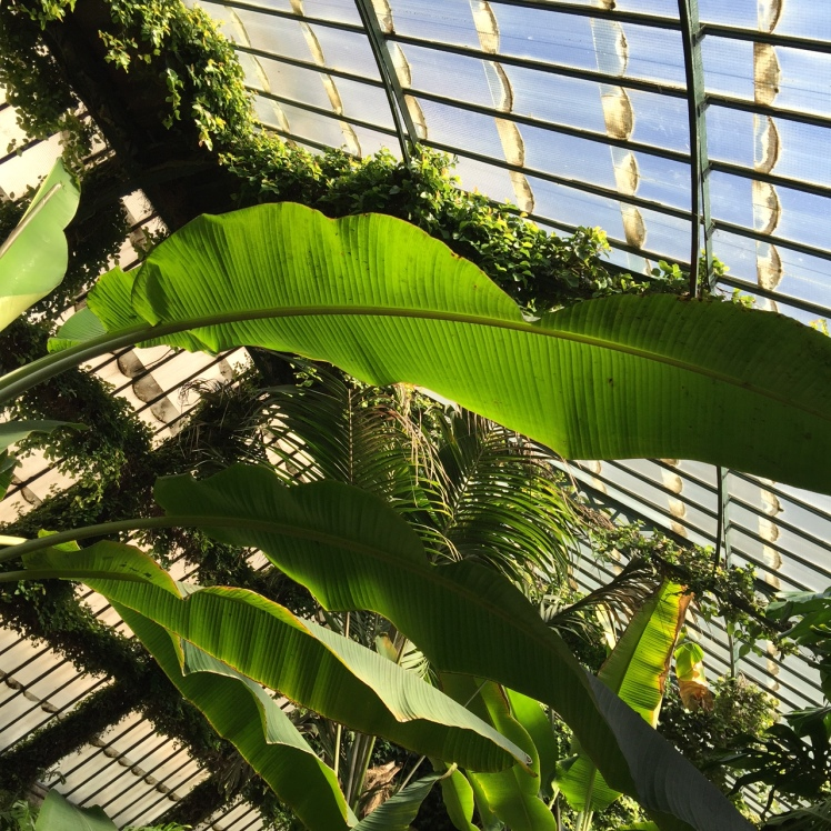 serres_jardin_botanique_madrid