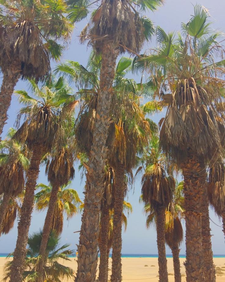 Fuerteventura, île Canaries cityguide bonnes adresses